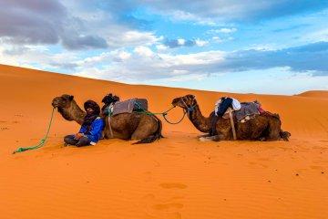 Safari Morocco Σαφάρι Μαρόκο